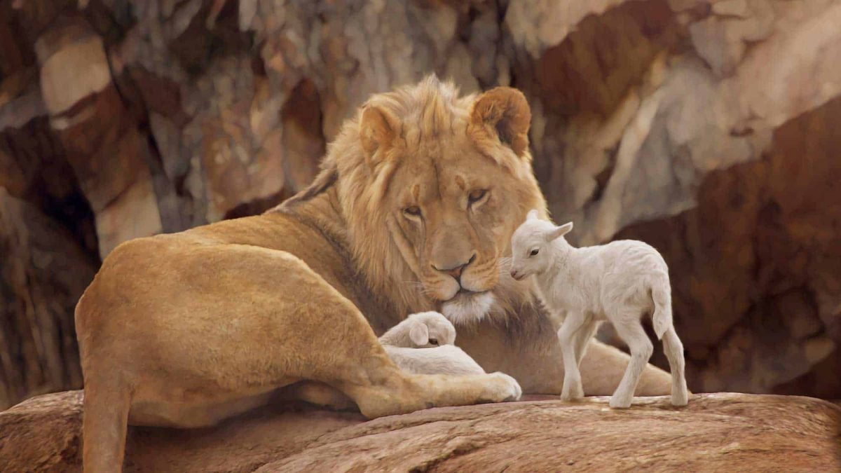 lion laying with lambs
